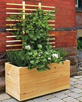 Really want some of these for my deck for privacy. I could grow sweat peas or clematis