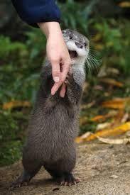 Pumped up otter his bushy boyfriend