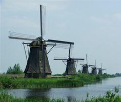 z- Willempie
