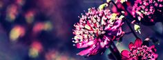 Group of: Purple Flower Cover Photos for the timeline profile ...