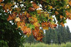 LA PETITE PRINCESSE: Retkeile Lohjansaaressa - vain tunnin päässä Helsingistä!