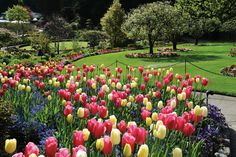 Save big with our Butchart Gardens Overnight package. Includes city tour, Butchart Gardens pass, hotel & round-trip transportation from Seattle to Victoria. Amazing Gardens, Beautiful Gardens, Buchart Gardens, Parks, Wind Spinners, Spring Bulbs, Spring Blooms, Organic Vegetables, Vegetables Garden