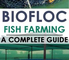 Tilapia Fish Farming, Catfish Farming, Farm Business, Business Ideas, Farming Guide, Aquaponics Diy, Goat Farming, Water Quality, Ranch