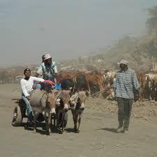 Image result for kimberley donkiekar Farm Animals, Africa, Donkeys, Cape, Art Ideas, Paintings, Beautiful, People, Animales