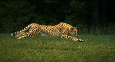 4 Fastest Land Animals You'll Never Overtake
