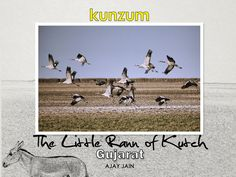 Little Rann of Kutch, Gujarat: e-Book - http://www.myeffecto.com/r/1k5t_pn