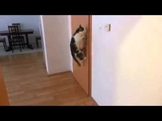Cat opens five doors!!!!! CLOSED DOORS?? Ant nobody got time for that :)