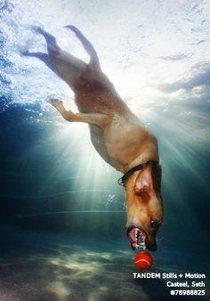 Underwater Dog Photography by my man ;-) www.littlefriendsphoto.com