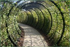 Ivy tunnel - this could be easily accomplished with pvc (like the structure for a greenhouse) & climbing vegetable & flowers!  Walk through a gorgeous tunnel & harvest your veggies for dinner & the centerpiece for your table as well! I really want to try this. (& maybe it'll keep the dogs out of the garden eating my yummy goodness!)