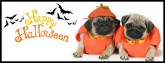 Pug Holiday Themed Facebook Cover Photos For Your Timeline. Pug Halloween Facebook Cover Photo