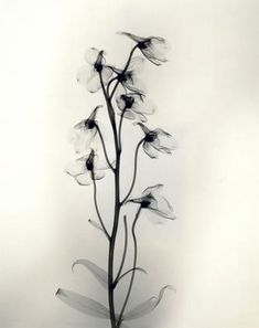Joseph Bellows Gallery - Dr. Dain L. Tasker - Images x-rays from 1930's