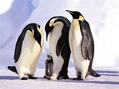 антарктида рисунок - Поиск в Google