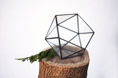 glass terrarium little icosahedron by boxwoodtree on Etsy, $60.00