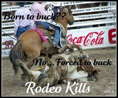 Rodeo Kills Horses