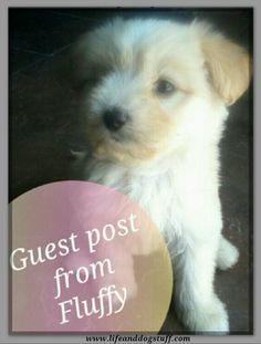 Guest Post From Fluffy The Puppy #dogs #blog