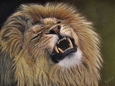Lion Fine Art Print: The King's Call. High quality art print of my realistic pastel painting of a male lion roaring loudly! Judah And The Lion, Male Lion, Thing 1, Surrealism Painting, Animal Paintings, Pastel Paintings, Pastel Drawing, Wildlife Art, Original Artwork