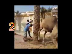 Videos For Fun: Man Vs Animals Funny Moments Video