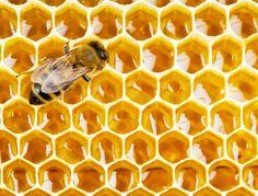 Connaissez-vous la propolis? Utilisée depuis l'Antiquité, cette substance produite par les abeilles recèle d'impressionnantes vertus santé.