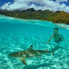 @jan.kirch swimming with sharks