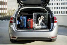 Wer seinen Hund mit in den Urlaub nehmen möchte, sollte sich vorab über die jeweiligen Einreisebestimmungen informieren. Welche zusätzlichen Vorschriften gelten, lest ihr hier.