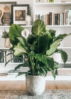 """Houseplants for the """"Not so Green Thumb"""". Home Greenhouse, Greenhouse Gardening, Vegetable Gardening, Container Gardening, House Plants Decor, Plant Decor, Indoor Garden, Home And Garden, Plantas Indoor"""