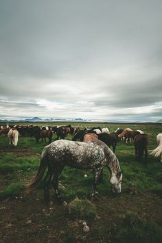 horse, animal, and nature-bild