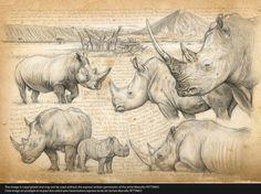 wildlife artist marcello pettineo - Buscar con Google