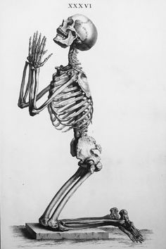 Osteographia The Anatomy of the Bones William Cheselden Anatomy Medicine Skeleton Skeleton Drawings, Skeleton Tattoos, Skeleton Art, Skeleton Watches, Skeleton Hands, Halloween Drawings, Creepy Tattoos, Halloween Images, Halloween Art