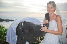 Baby elephant blessing