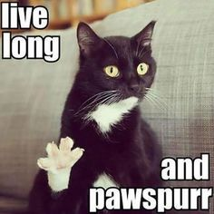 Spock's cat...I love how my sister immediately thought of me when she saw this.