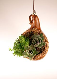 Gourd succulent and cactus hanging planter by EricsGourdArt Succulent Terrarium, Cacti And Succulents, Planting Succulents, Planting Flowers, Garden Crafts, Garden Projects, Craft Projects, Cactus Flower, Flower Pots
