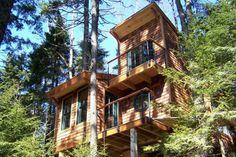 Island Tree House by David Matero
