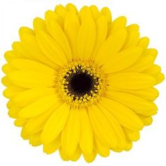 35 best yellow wedding flowers images on pinterest yellow flowers gerbera flower yellow mightylinksfo