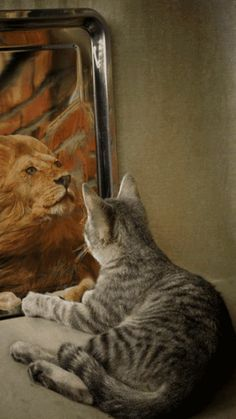 Populaire sur Google+ kitten see's lion in mirror reflection How You See yourself