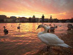 Visitar Praga!