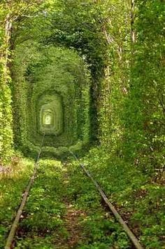 Trying to decide if this is real.  It's still cool. This looks like it's from Alice In Wonderland.