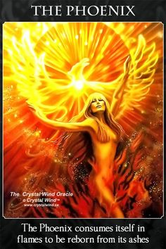 A Collection of Phoenix Fire Bird Art Phoenix Art, Phoenix Rising, Phoenix Quotes, Phoenix Images, Bild Gold, Phoenix Tattoo Design, Design Tattoos, Tattoo Designs, Rise From The Ashes