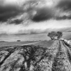 One from a winter walk near Walton West Yorkshire Winter 2017. There was a great quality to the light and also the first time I'd been walking in that area. Many interesting things to see from expansive agriculture commercial woods to disused canals and railways. # # # # # #photography #blackandwhite #monochrome #landscape #trees #shadow #winter #walking #wakefield #walton #westyorkshire #yorkshire