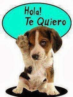 Hola! te quiero #amor #love #i_love_you #te_quiero #te_amo