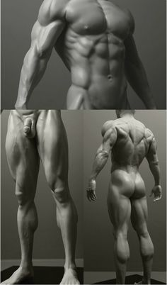 anatomy of the man