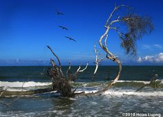 Wild beach - Hunting Island State Park, SC