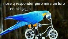 Colorful Parrots Riding Tiny Bikes & Rollerskates: Free Circus Show Funny Images, Funny Pictures, Random Pictures, Funny Parrots, Top Memes, Meme Faces, Reaction Pictures, Derp, Bicycle