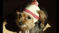 gorro para perros y para perras a crochet/how to crochet a dog hat.