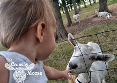 My son was bottle fed raw goat's milk formula as a baby. This is how and why I made the decision to use goat milk, instead of the commercial brands. Goat Milk For Babies, Goat Milk Baby Formula, Baby Sign Language, Montessori Baby, Natural Parenting, Baby Led Weaning, Mom Advice, Everything Baby, Baby Time