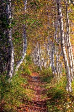 Trail (Acadia National Park near Bar Harbor, Maine) by Jim Dollar