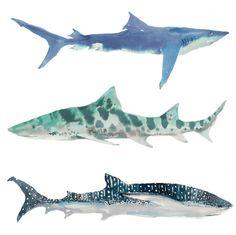 Shark Notecards