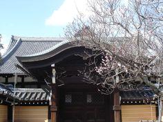 くろ谷 金戒光明寺 / Kurodani Konkai-Komyo-ji Temple / Temple Kurodani Konkai-Komyo-ji