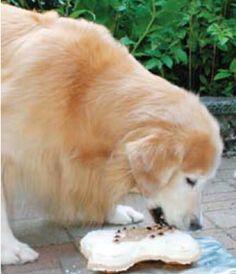 Cake Recipes For Dogs   Animal Wellness