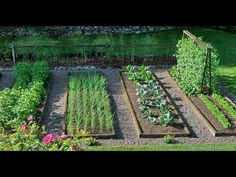 Какие грядки сделать под различные овощи