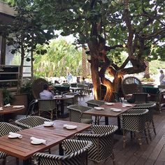 Lonny Travels: Bite Size Miami—With a giant tree that seems to be growing right through the deck, the wild yet serene landscape makes for the most glamorous backdrop, and the fresh sugarcane mojito is enough to make you forget about your flight home.
